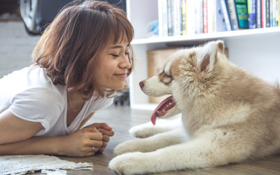 Who gets the family pet after separation?